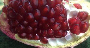 قیمت انار در روسیه